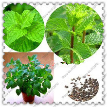 500 pcs/bag spearmint mint seeds edible catnip plant flower seeds vegetable seeds bonsai herb seeds for home garden easy grow(China)