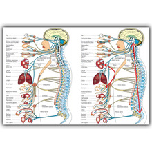 Human Science Human Body Organs Medical Knowledge Silk Poster Printing, Custom Wallpaper Decorated HospitalQT114(China)