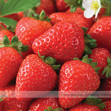 Durban F1 Strawberry Seeds, 1 Professional Pack, 100 Seeds / Pack, High Yield Strawberry #NF541