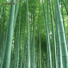 Fresh Giant Moso Bamboo Seeds for DIY Home Garden 60 Particles / lot
