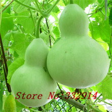 Sale!20 Giant Bottle Gourd Seeds Vegetable Seeds ---interesting and attractive Ornamental Practical, easy growing ,