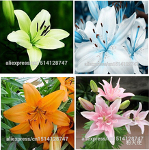 lily seeds, cheap perfume lily seeds, Yellow White Red Pink Purple Lily Flower Garden Plant - Mixing different varieties 100pcs