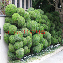 100 PCS juniper seeds JUNIPER BALL bonsai tree Seeds tree outdoor bonsai for home garden planting Absorb harmful air(China)