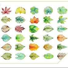 30pcs/lot New leaves design postcards Nice Stationry Greeting Cards Calendars Planner & Cards(China)