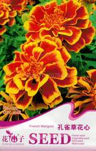 Peacock Grass Flower Heart Seeds Marigold Tagetes Patula Flowers Garden Plants A257