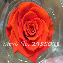 Recommend Seeds! Red Rose Seeds, 50 Seeds/Pack, Beauty Exotic Ture Blood Rose Flower Seeds-Land Miracle Wedding Decoration(China)
