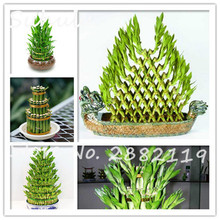 40 seeds Rare Lucky Bamboo Seeds DIY a Bamboo House Bonsai Potted Anti Radiation fresh the air Absorb Dust Tree Seeds
