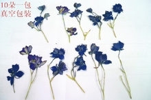 Press flower Natural flowers dried flower  DIY material blue delphinium flowers with branches  sale 1 lot/10 bags  free shipment