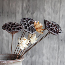Lotus seedless natural dry lotus living room floor lotus dried flowers wholesale home decoration Buddha for shooting props