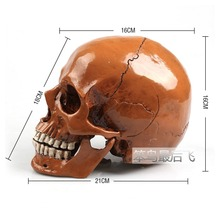 Antique brown 1: 1 human skull model life size resin skull model art teaching human skeleton model free shipping(China)