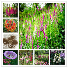 Rare different color styles Fritillaria foxglove 80PCS/bag Digitalis potted bonsai garden flower seeds DIY home garden(China)