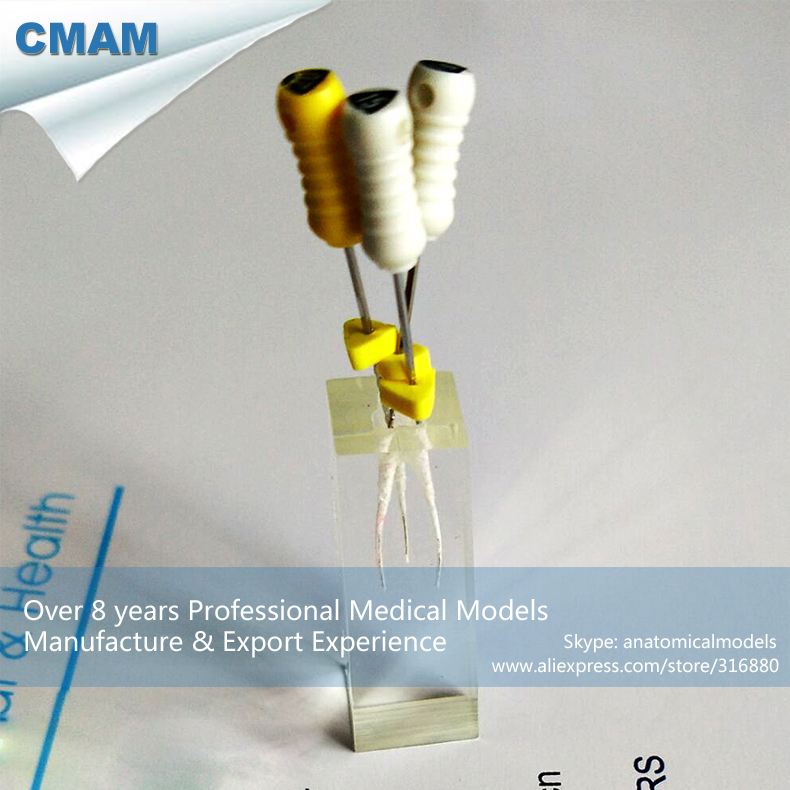 12586 CMAM-TOOTH10 Transparent Block Root Canals with for Root Canal Filling Practice<br>