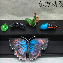 pvc figure Genuine simulation model toy butterfly life cycle 5PCS/ set(China)