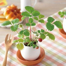2016 New Creative DIY Mini Lucky Egg Potted Plant Office Desktop Home Decor Free shipping