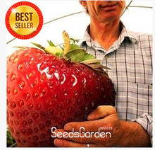 Promotion!strawberry giant strawberry seeds sweet four seasons,Rare, Fragrant, Sweet & Juicy - 200 pcs/Lot,#JO9E8A(China)