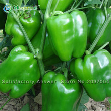Loss Promotion! Organic Green Pepper Seed Healthy Organic Vegetable Seeds and Garden Courtyard Sweet Pepper Pot Plants 100PCS(China)