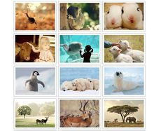 "32 ""The Nature of Pet"" Postcard Set / Greeting Card Assorted / Birthday Cards Lot"