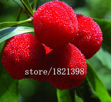 Big sale 10 Particles / Bag Arbutus Unedo Strawberry Tree Delicious Chinese Fruit Seeds For Healthy And Home Garden Easy Grow