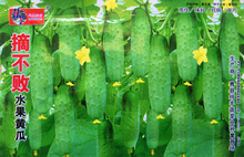 (Mix minimum order $5)Hot selling 1 pack 50pcs+ Fruit cucumber seed - vegetable seeds DIY home garden free shipping