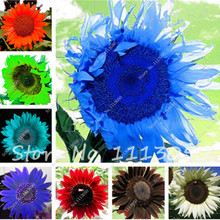 40 Pcs Rare Color Sunflower Flower,Sunflower Seed for Planting,Bonsai Flower Seeds,Natural Growth for Home Garden Supplies