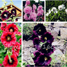 100Pcs/bag Hollyhock Seeds,Garden Flower Seeds,Subtropical Bonsai Plant for Outdoor,Summer Flowering, Easy to Grow(China)