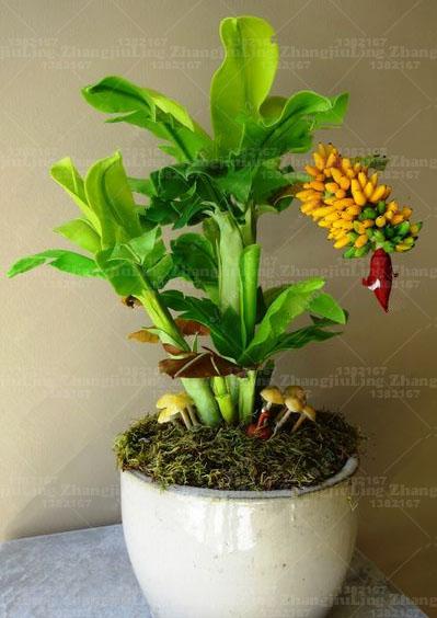 100pcs-bag-Potted-banana-seeds-bonsai-Organic-fruit-seeds-Healthy-and-nutritious-food-fruits-dwarf-banana(3)_