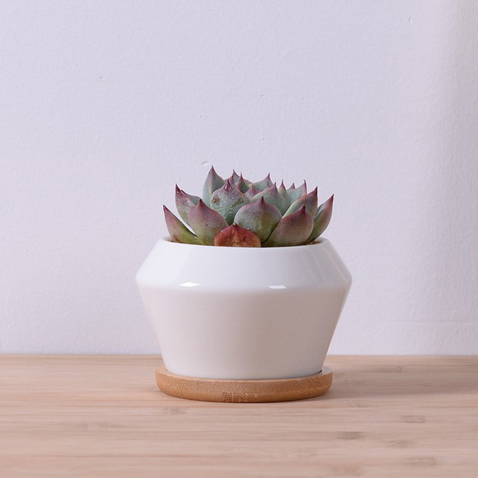 Small White Plant Pots Part - 24: Garden Supplies White Glazed Ceramic Decorative Flower Pots With Bamboo  Tray Desktop Planter Pots Small For Succulent
