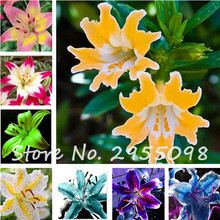 2017 HOT Sale Mix Lily Seeds, 100 PCS 24 Colors Cheap Perfume Lilies Seeds, Rare Color Flower Garden Plant, Bonsai Lily Bulbs(China)