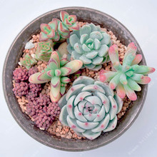 100 Pcs Cactus Seeds Mix Organic Ornamental Seed Rare succulents can purify the air and prevent radiation for home garden