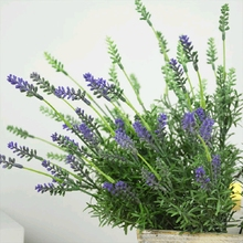 7 Forks Tufting Grass Artificial Romantic Lavender Flowers 2 Color Simulation Plants Grass Wall Decoration Home Display Flower(China)