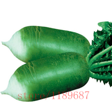100pcs Green Sweet radish seeds,Fruit Vegetables Vitamin C Food Seeds,plant for home garden(China)