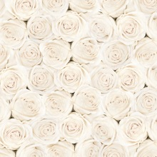 white flower roses wedding photography backdrop studio valentine's photography backdrops studio  wedding background D-1804