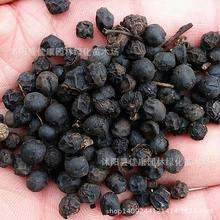 200gram leaflets Hackberry seed  yellow fruit bomb  Park elm tree Tsai real photo  tree seeds