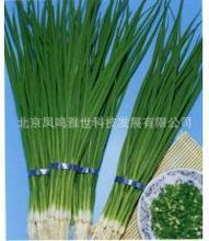 Beijing Small Shallot Seeds Vegetable 100seed(China)