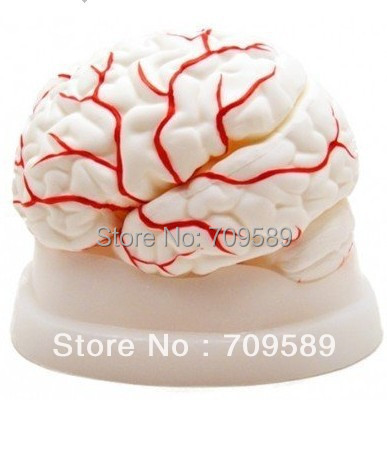 HOT SALES advanced Anatomical mBrain model with Arteries<br>