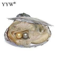 Luxury Big Freshwater Oyster Pearls 10-11mm Pearls With Oyster Dyed Pearls Shell Vacuum-packed Perfect Round Natural Real Pearls
