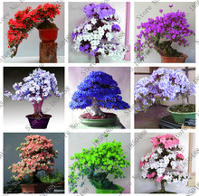 100 pcs / bag Rare Bonsai 23 varieties of azalea DIY home and garden plants with Sakura Japanese flower seeds