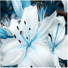 lily seeds, Free shipping cheap perfume lily seed, mixing different varieties Flower Seeds- 100 pcs(China)