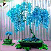 Sale * 50pcs Rare Sky Blue Willow Seeds Chinese Perennial Flower Indoor Plants Seed Evergreen Bonsai Tree For Garden Decoration