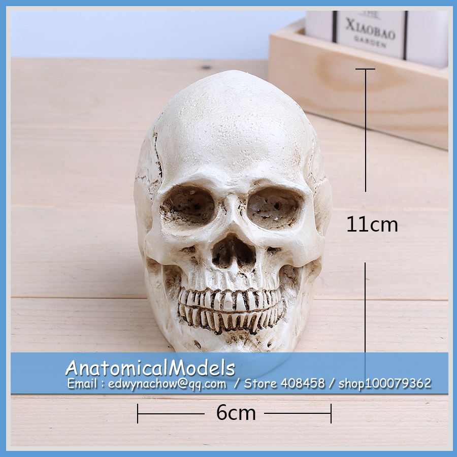 ED-AM002 Human Hand Skull 11*6cm Mini Size Skeleton Anatomical Models<br>