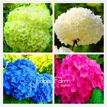 Genuine! 100 Pieces/Pack Hydrangea Seeds Mixed Hydrangea Flowers Home plant Bonsai Viburnum