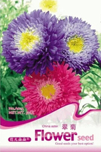 1 Original Pack 50 Seeds / Pack China aster Seeds,  bonsai flower seeds for home