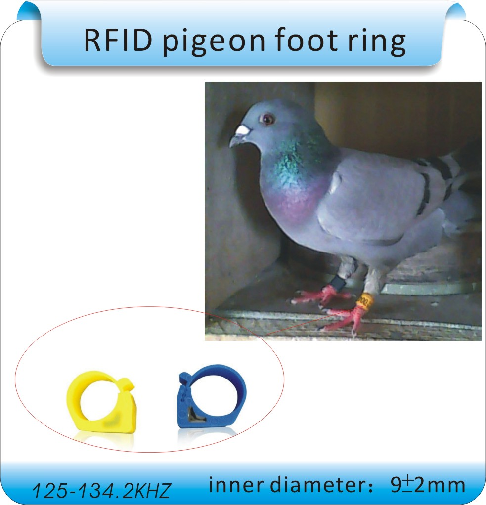 100PC pigeon special Poultry automated management  TK4100  125KHZ RFID foot ring with electronic tags siez 0.9cm<br><br>Aliexpress