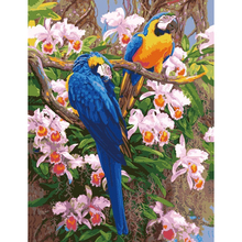 Parrot flower bird, painting by numbers, canvas oil painting, pictures by numbers, quardos home decor, picture on the wall RS-73