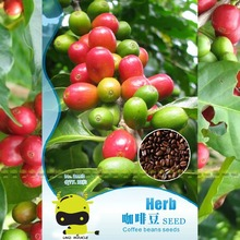Heirloom Arabica Coffee Beans Seeds, 10 Seeds(1 Original Pack), Coffee Cherry Bonsai Tree Plants for courtyard garden