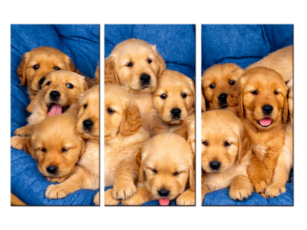 2019 Canvas Painting Labrador Puppies Dogs Canvas Poster Print For