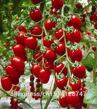 Milk red tomato seeds, cherry tomatoes, tomato seeds organic fruits and vegetables - 20 Seed particles