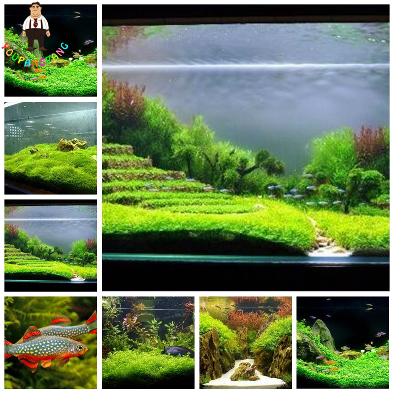 1000 pcs / Bag Aquarium Grass Seeds Water Grasses Random Aquatic Plant Indoor Planta/Plante Beautifying Exotic Plant Seeds Mixed(China (Mainland))