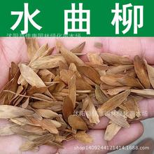 Ash tree seeds freshly collected seed  big-leaf ash northeast of ash seeds canal Liu real shot 200g / Pack