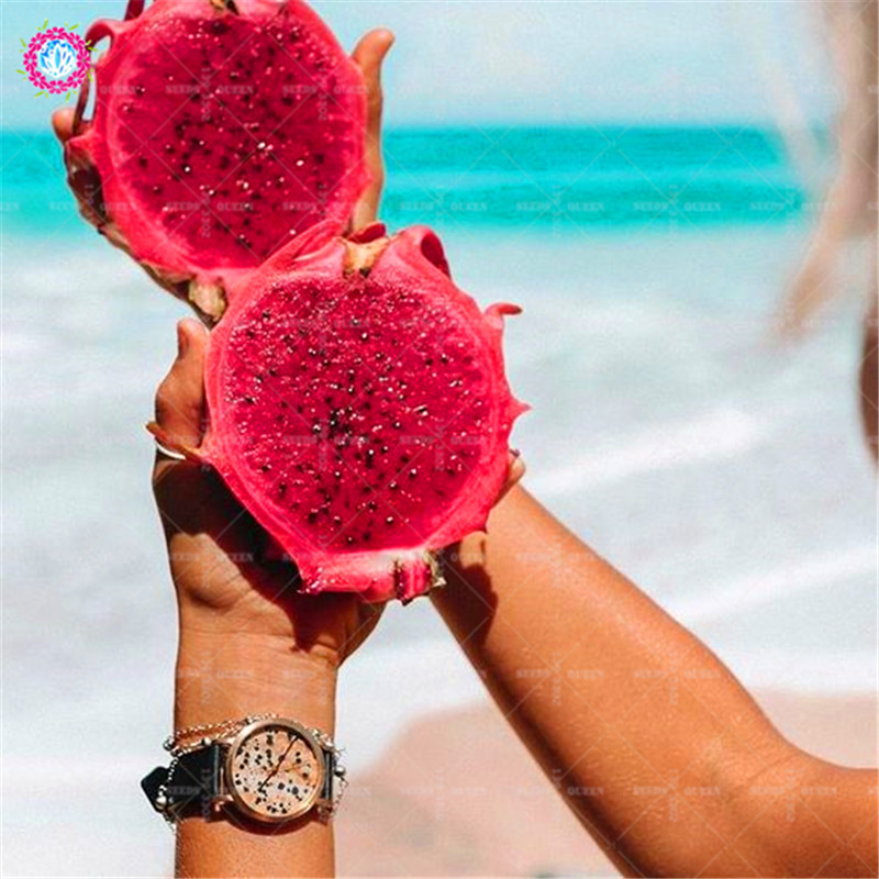 HTB1kZ9zzQSWBuNjSszdq6zeSpXav - 100pcs Dragon fruit Seeds Dwarf Fruit Trees Bonsai